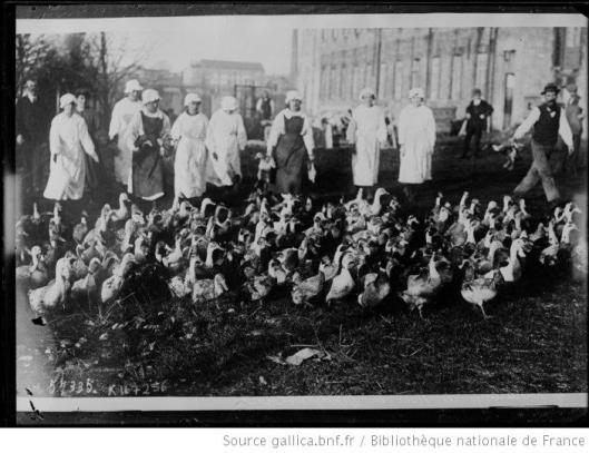 Agence Rol, Préparatifs de Noël en Angleterre vue sur les canards qui vont être sacrifiés, photographie, 1919, BnF/Gallica