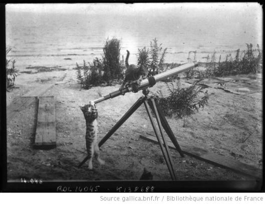 Agence Rol, Chat regardant à travers une longue-vue et autre chat perché dessus, 1911, Gallica
