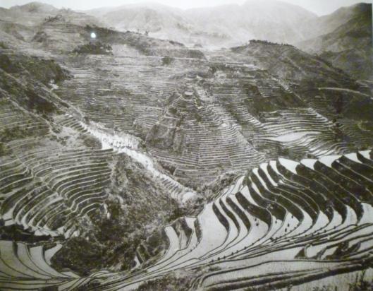 Les rizières de Luzon, vers 1910