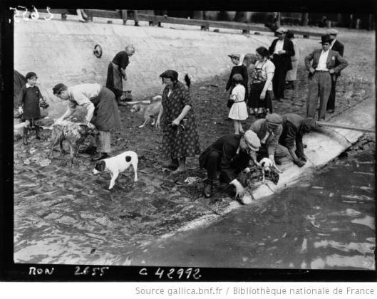 Agence Mondial, La toilette des chiens sur les bords de la Seine, 1932, Gallica/BnF