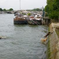 Carte postale de Paris: les bords de Seine, hier et aujourd'hui.