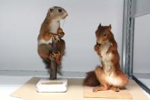 Animaux naturalisés, réserves du musée national de l'Éducation, Rouen